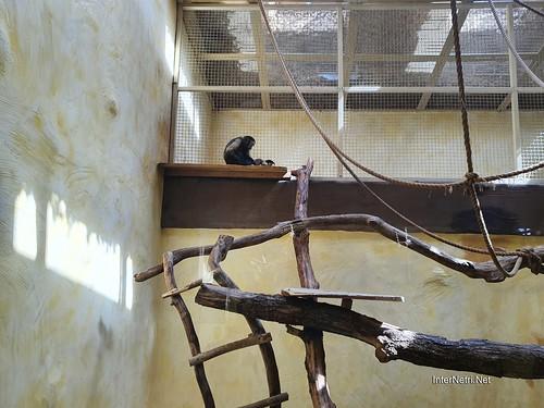 Зоопарк 12 місяців в Димері біля Київа  Ukraine Internetri 084