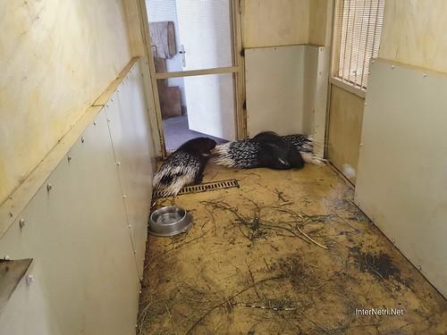 Зоопарк 12 місяців в Димері біля Київа  Ukraine Internetri 080
