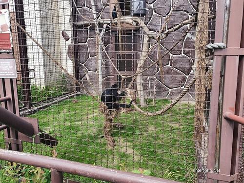 Зоопарк 12 місяців в Димері біля Київа  Ukraine Internetri 078