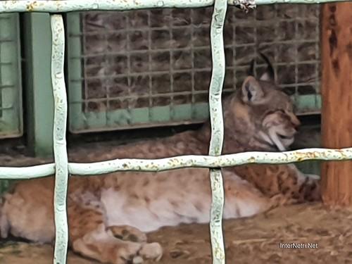 Зоопарк 12 місяців в Димері біля Київа  Ukraine Internetri 050