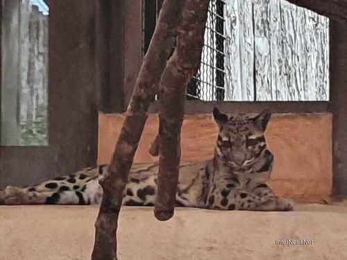 Зоопарк 12 місяців в Димері біля Київа  Ukraine Internetri 042