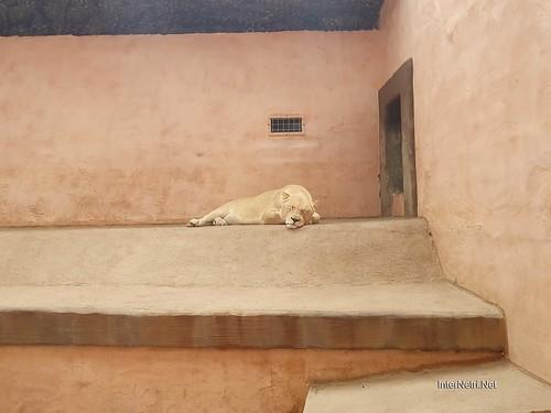 Зоопарк 12 місяців в Димері біля Київа  Ukraine Internetri 038