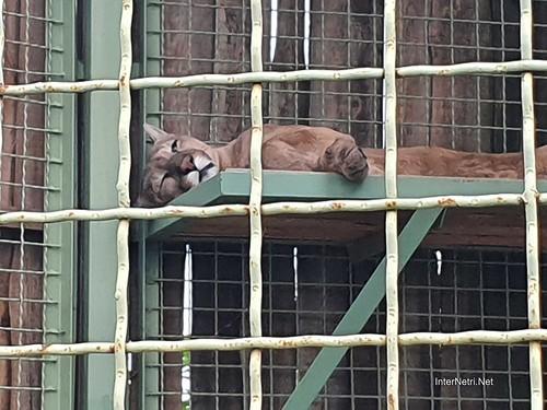 Зоопарк 12 місяців в Димері біля Київа  Ukraine Internetri 033