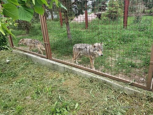 Зоопарк 12 місяців в Димері біля Київа  Ukraine Internetri 014