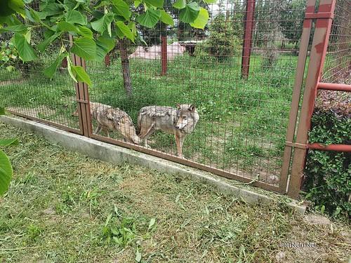 Зоопарк 12 місяців в Димері біля Київа  Ukraine Internetri 013