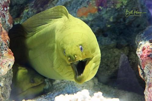 Texas 2020 11-10 Corpus Cristi Texas State Aquarium IMG_9178-1
