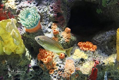 Texas 2020 11-10 Corpus Cristi Texas State Aquarium IMG_9167-1
