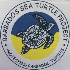 Barbados Sea Turtle Project
