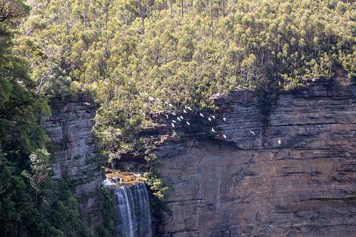 Katoomba Falls Walk Blue Mountains-12