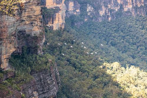 Katoomba Falls Walk Blue Mountains-8
