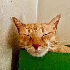 cat 猫 ネコ ねこ 野良猫 alleycat Straycat 流浪猫 Gatocallejero Chaterrant ????? Katze chat gatto gato feles кошка KAT gato ??? ko?ka kass муур pisic