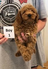 Georgie Boy 1 pic 3 6-19