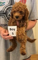 Georgie Boy 5 pic 2 6-19