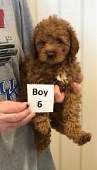 Georgie Boy 6 6-19