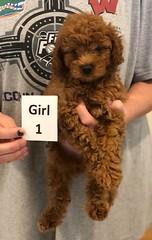 Georgie Girl 1 6-19