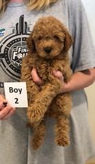 Georgie Boy 2 6-19