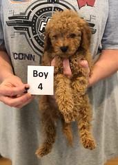 Georgie Boy 4 pic 3 6-19