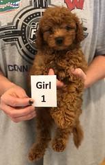 Georgie Girl 1 pic 4 6-19