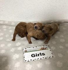Ariel Girls 6-19