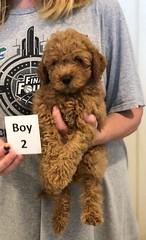Georgie Boy 2 pic 4 6-19