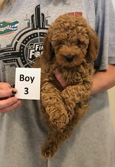 Georgie Boy 3 6-19