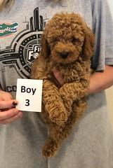 Georgie Boy 3 pic 2 6-19