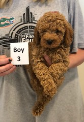 Georgie Boy 3 pic 3 6-19