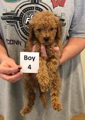 Georgie Boy 4 6-19