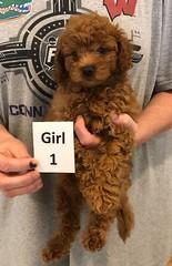 Georgie Girl 1 pic 2 6-19