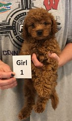 Georgie Girl 1 pic 3 6-19