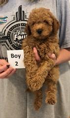 Georgie Boy 2 pic 3 6-19