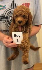 Georgie Boy 5 pic 4 6-19