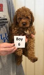 Georgie Boy 6 pic 2 6-19