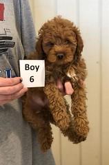 Georgie Boy 6 pic 3 6-19