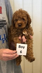 Georgie Boy 6 pic 4 6-19