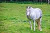 A horse, in Devon...