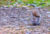 A damp Squirrel in Devon, England...