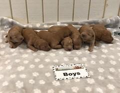 Bailey Boys 6-25