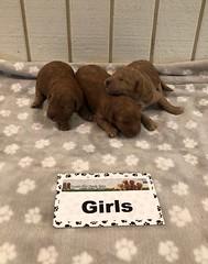Bailey Girls pic 4 6-25