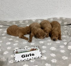 Ariel Girls pic 2 6-25