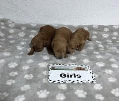 Gracie Girls pic 2 6-25