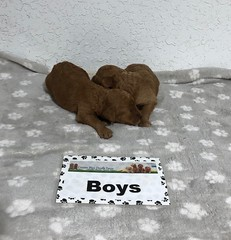 Carly Boys pic 3 6-25