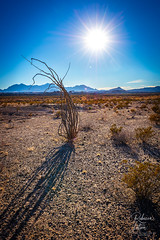 Hot, Dry, Thirsty Landscape