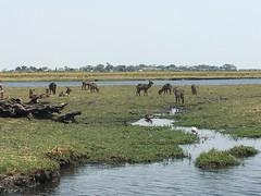 Where the antelope roam