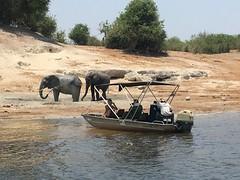 Elephant Spotting
