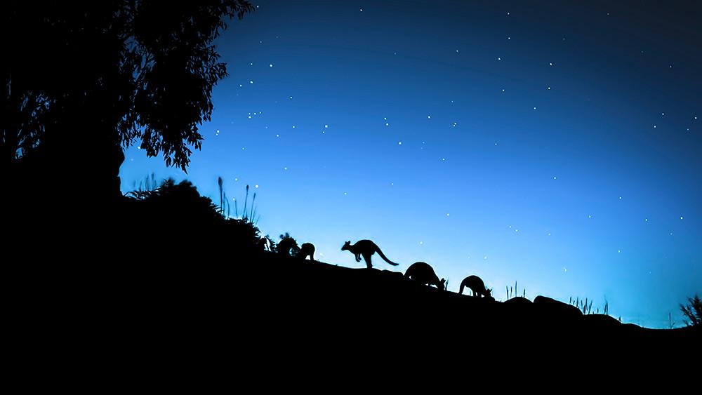 Earth_At_Night_Photo_020301