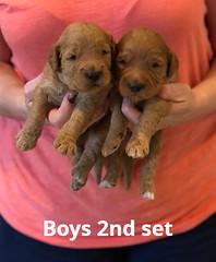 Bailey Boys 2nd set pic 2 7-2