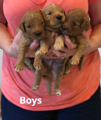 Bailey Boys pic 4 7-2