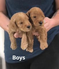 Carly Boys 7-2