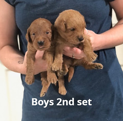Ariel Boys 2nd et 7-2
